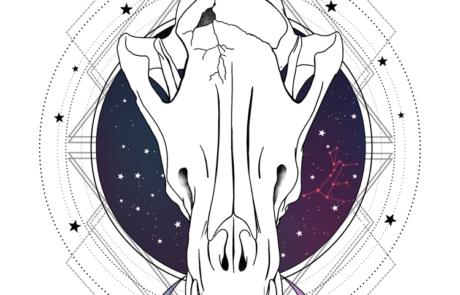 Astroboletos | 8.5x11 | Adobe Photoshop | Wacom Intuos5